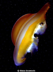 This deep space alien object is the photo of a jellyfish ... by Blaza Jovanovic 